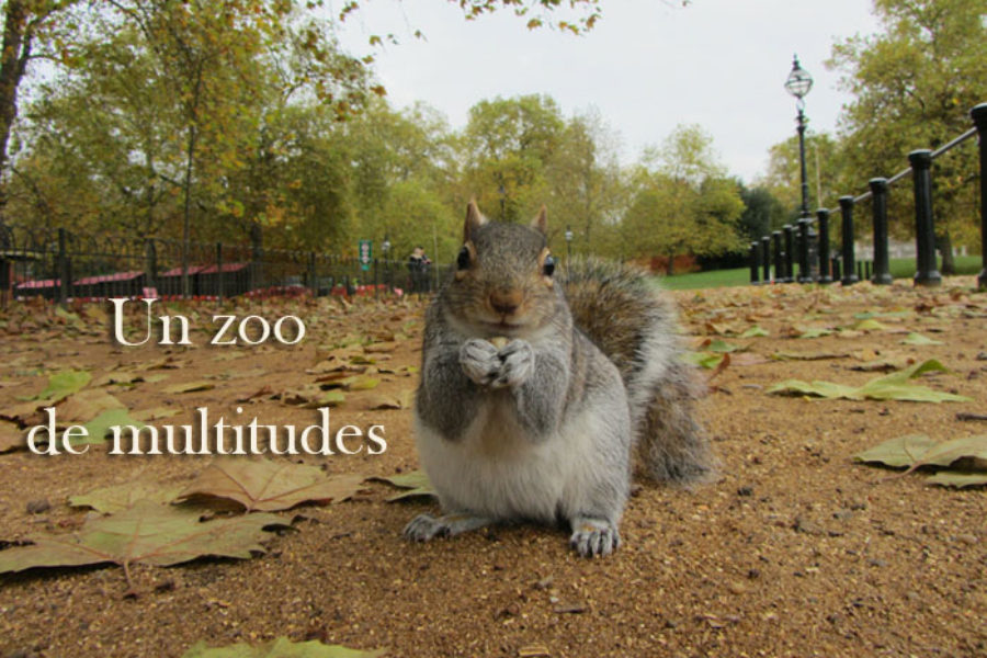 Un zoo de multitudes