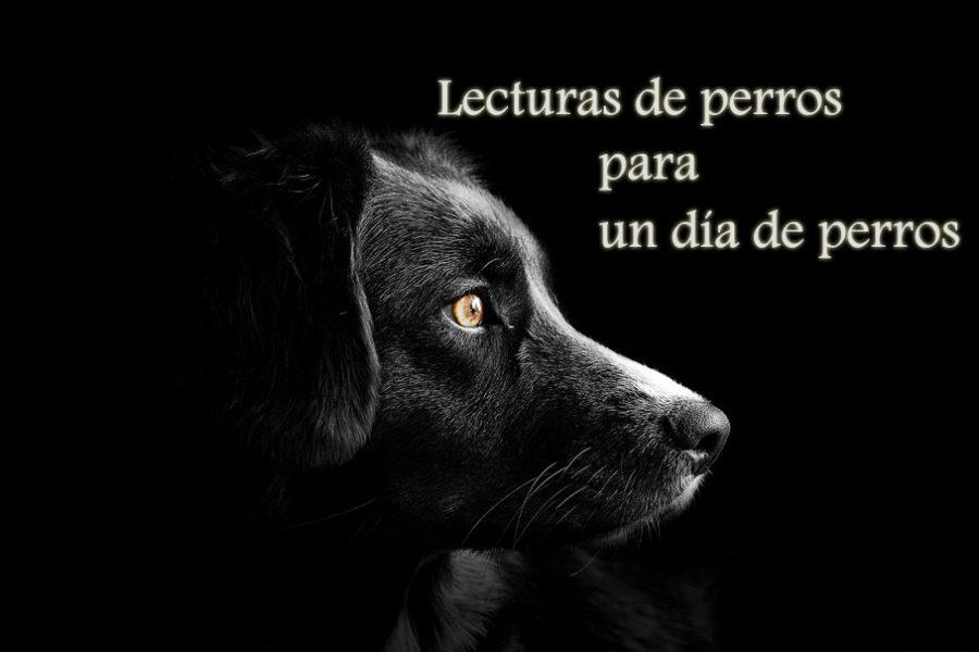 Lecturas de perros para un día de perros